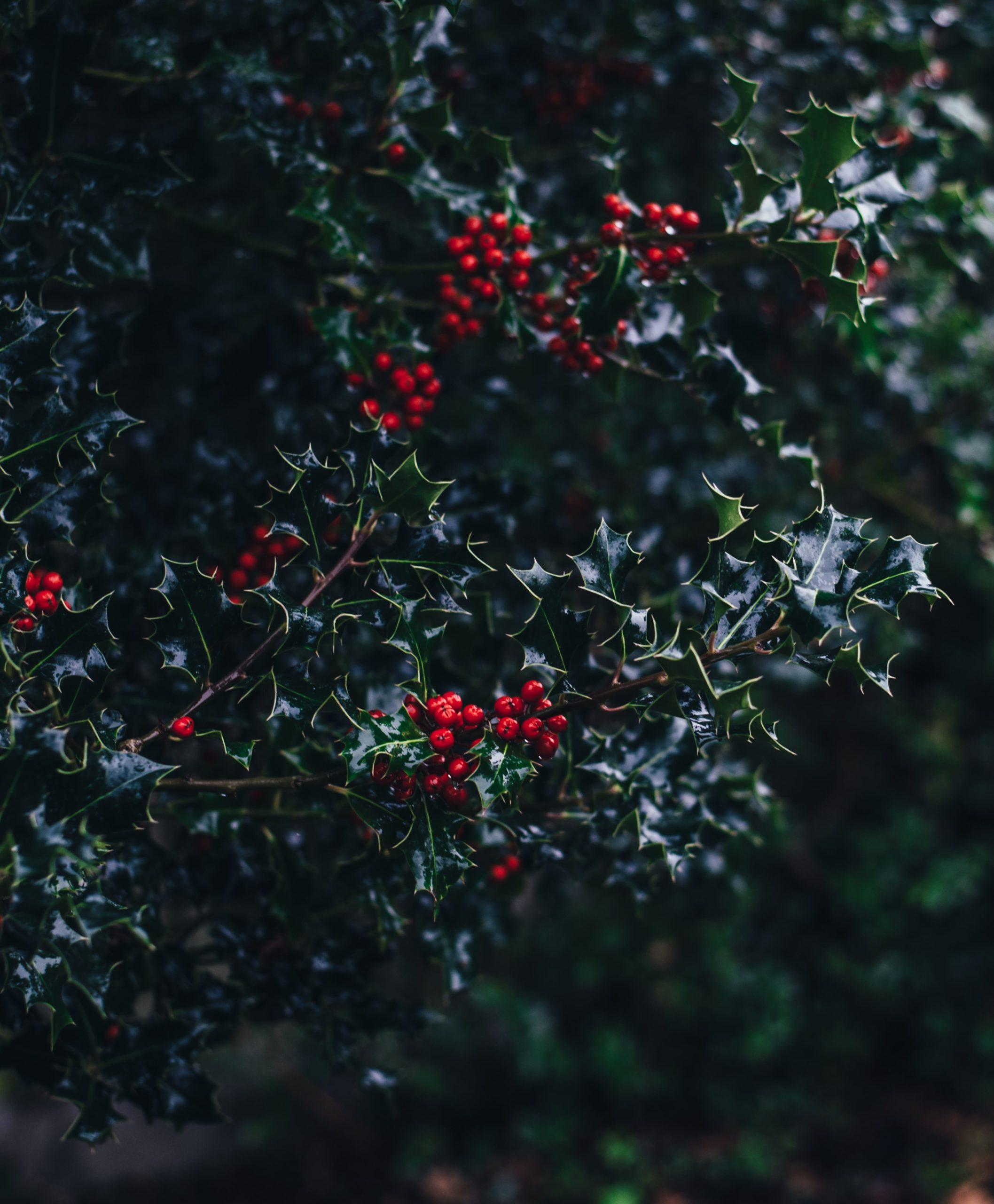 Reimagining Christmas